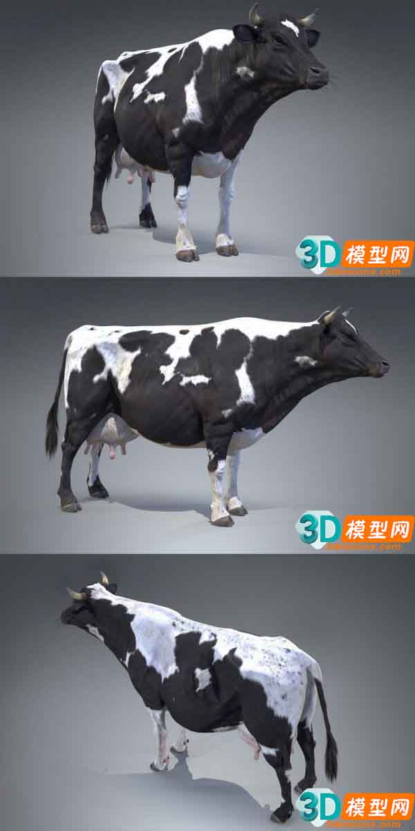 Black And White Milch Cow (PBR)插图